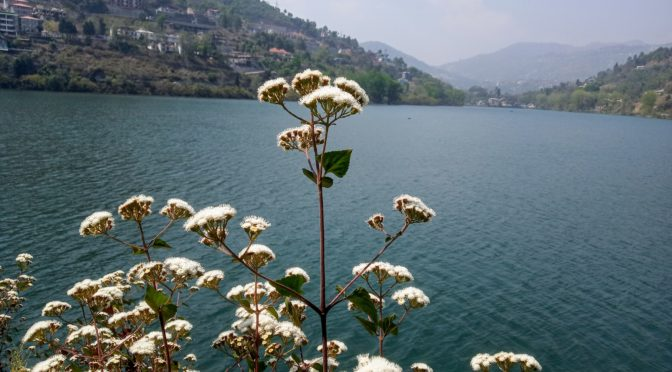 Excursions from Camp Sparrow, Jeolikote, Nainital